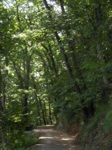 Sentiero per le Pietre Strette