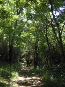 sentiero sul monte di Portofino