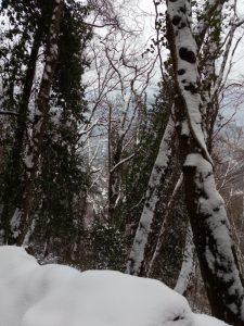 Neve sul monte di Portofino